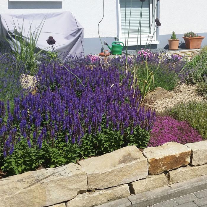 Blühende Vielfalt im Vorgarten, Trockenmauer Do-Menglinghausen